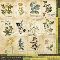 """Лист односторонней бумаги 30*30 см из коллекции """"Botany summer"""" от Фабрики Декора"""