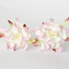 Гардения бело-розовая, 5 см